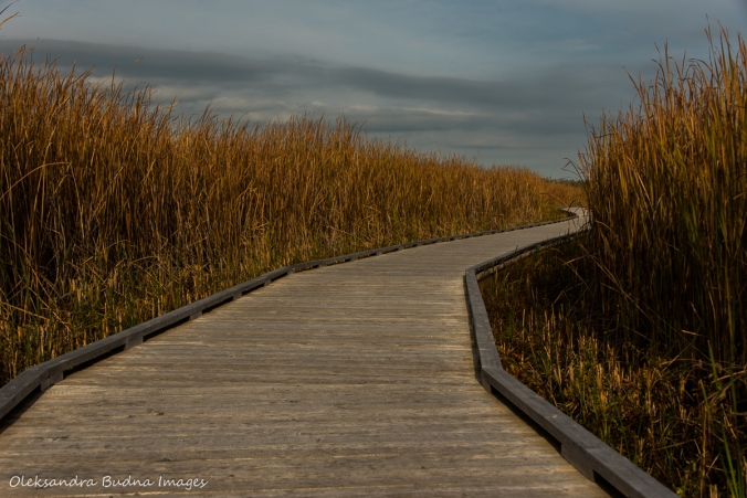 Marsh board walk at Point Pelee National Park
