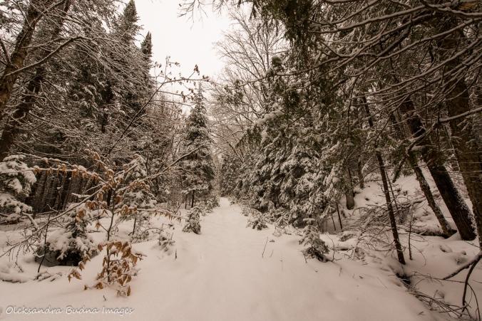 forest at Les Toits du Monde