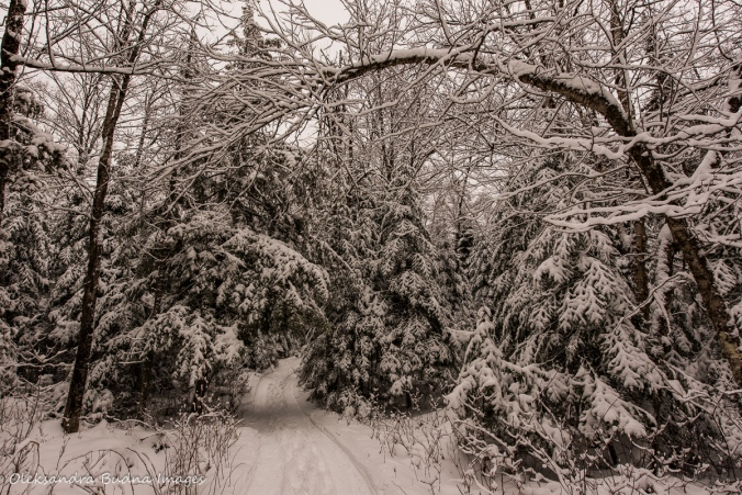 snow covered forest at Les Toits du Monde