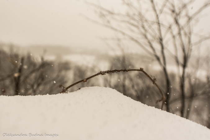 snowy scene at Rattlesnake point conservation area