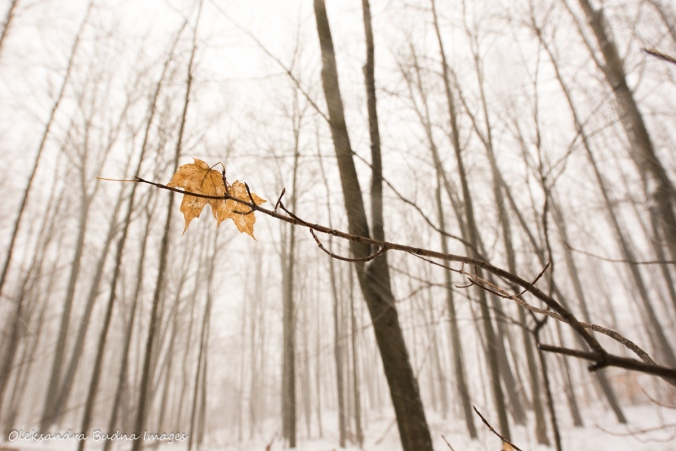 leaves against a snowy forest at Rattlesnake point