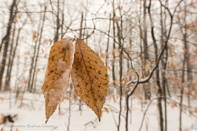 brown leaves against snowy forest
