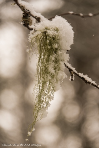 snow on the moss