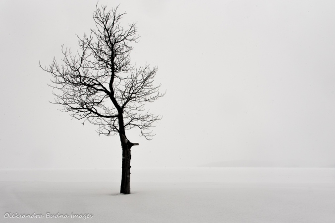 lone tree against snow covered Windy Lake