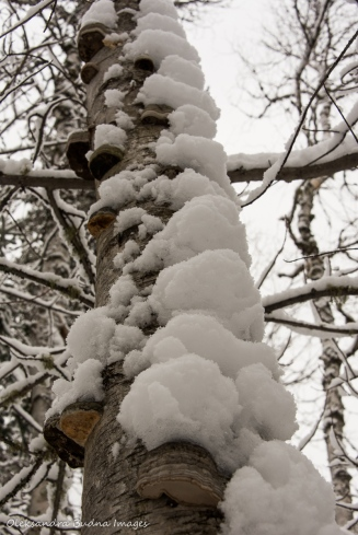tree trunk covered in snow