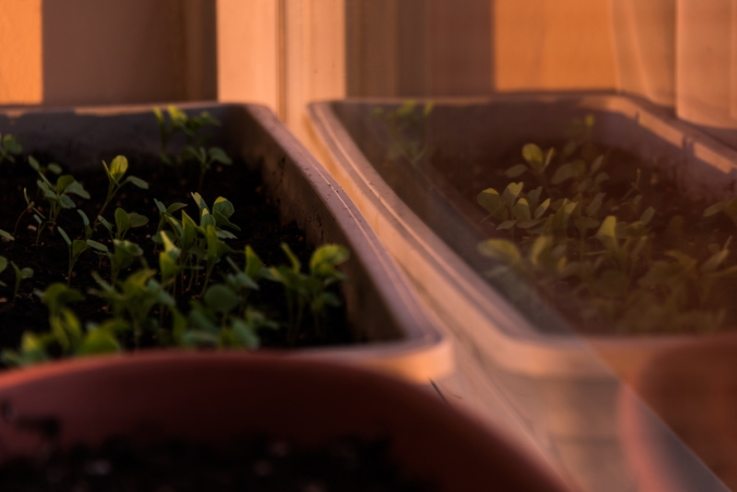 seedlings in a container
