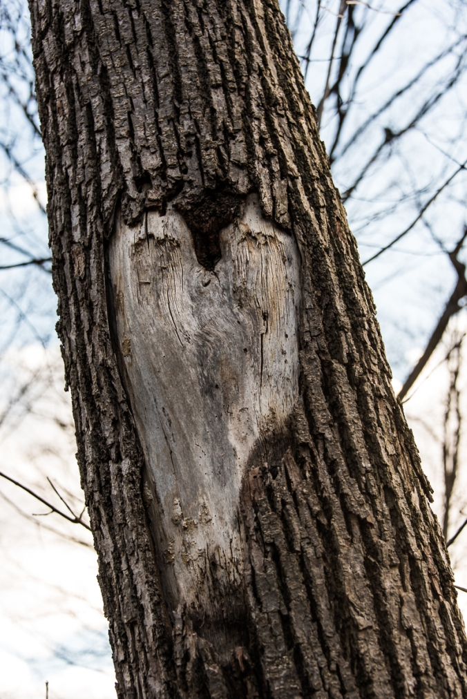 heart on a tree trunk