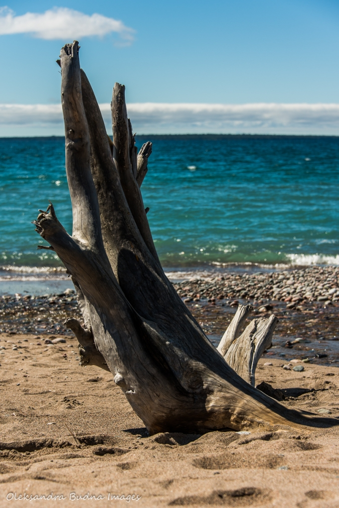 driftwood on Agawa Bay on Lake Superior