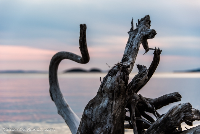 driftwood at Neys Provincial Park on lake superior