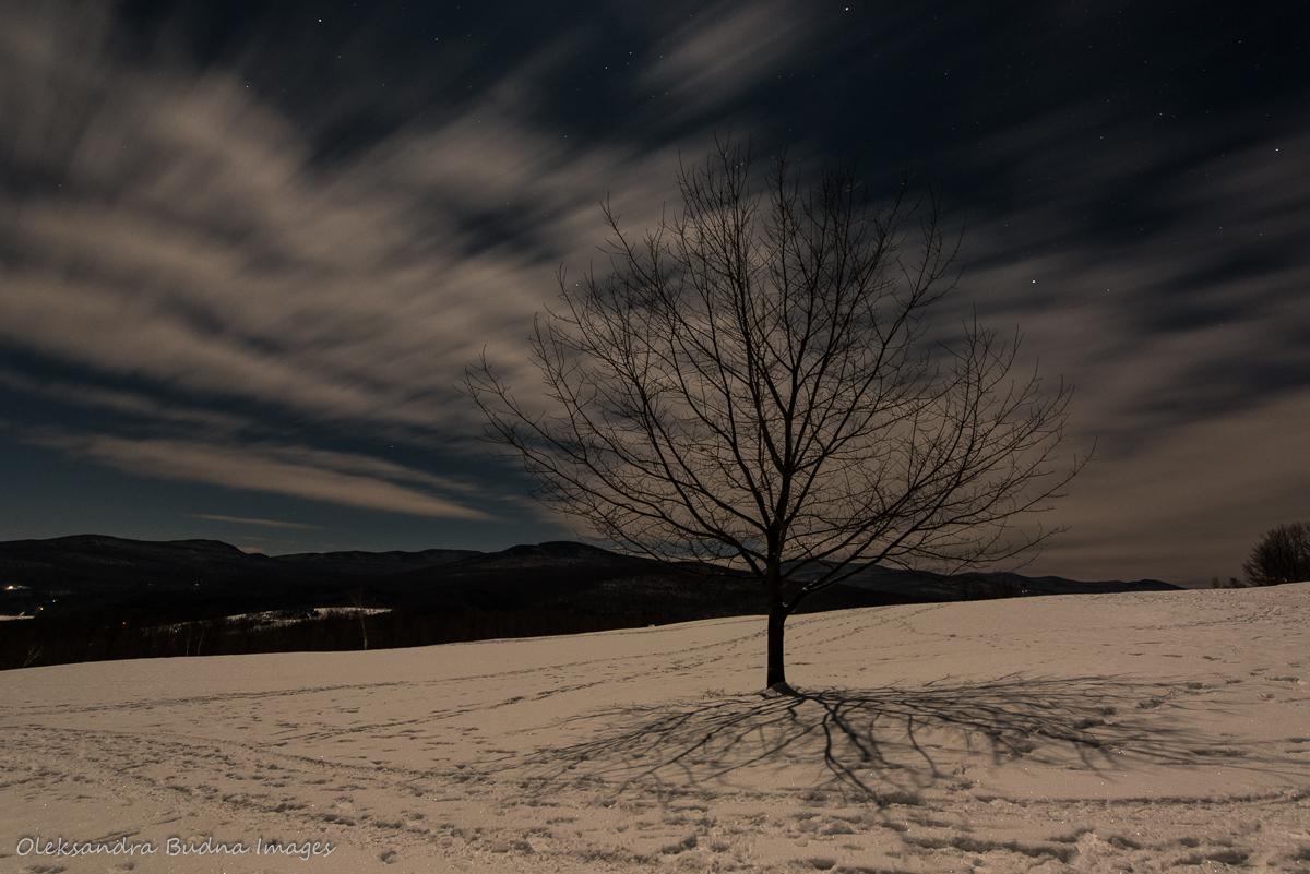 tree at Au Diable Vert in the moonlight