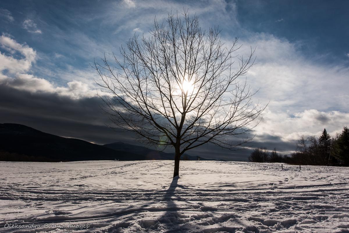 tree at Au Diable Vert
