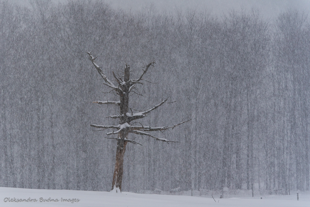 winter at Au Diable Vert
