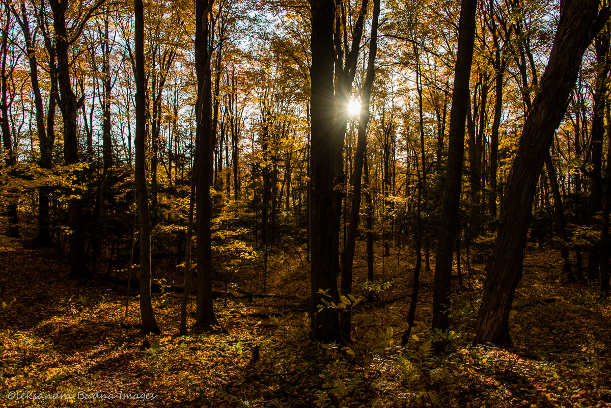sunlight streaming through the forest int he fall