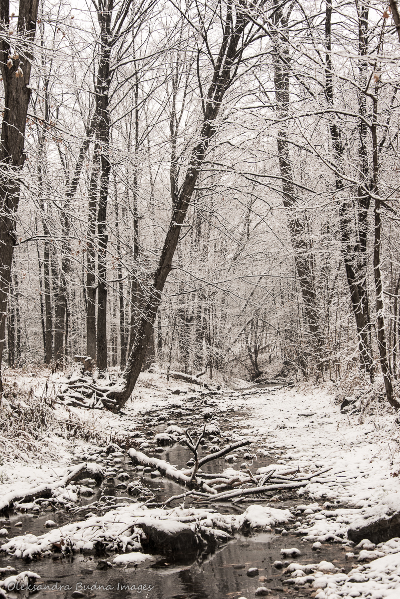 creek in Etobicoke in the winter