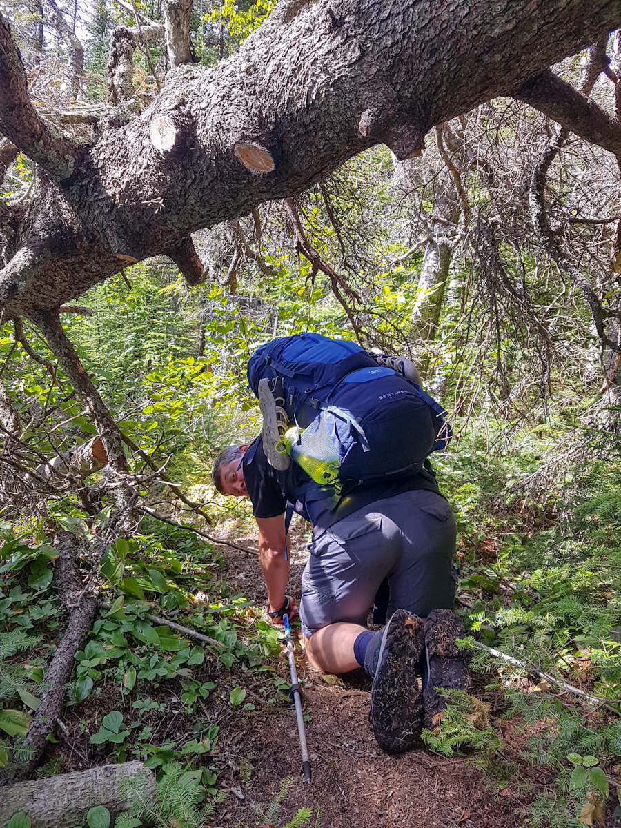 climbing under a fallen tree while backpacking in Pukaskwa